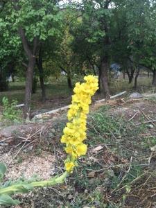 Roadside flower